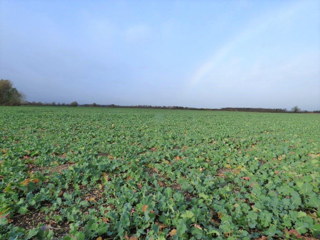 49.81 Acres (20.16 Ha) Arram Road & Old Road, Leconfield, Beverley, HU17 7NP